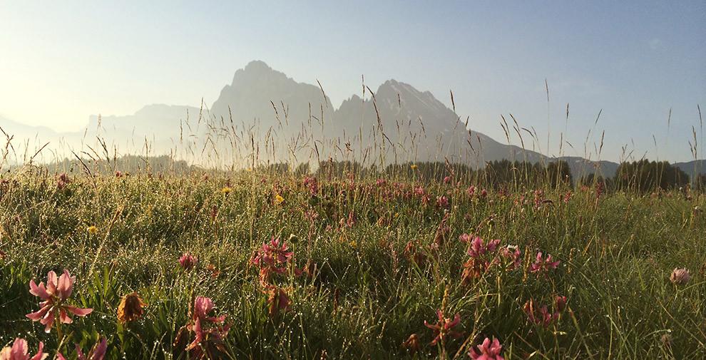 Lang- und Plattkofel im Morgentau